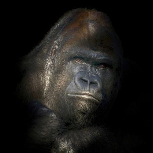 Portret van een zilver rug Gorilla