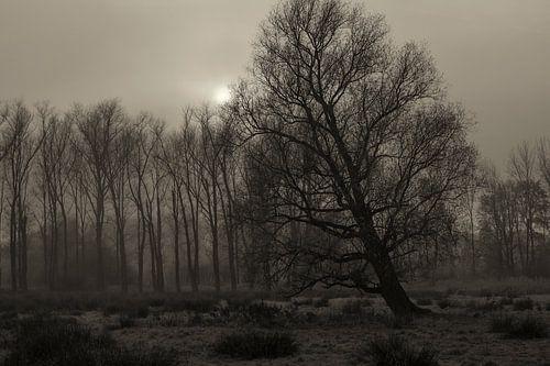 bomen, mist en zon