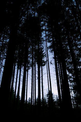 Hoge bomen in de Vogezen