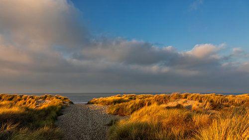 Winter Middag Licht op de duinen aan zee