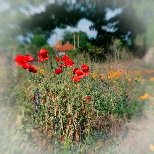 Bloemen wei