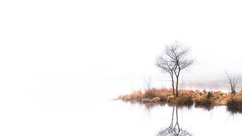Twin trees Pano #2