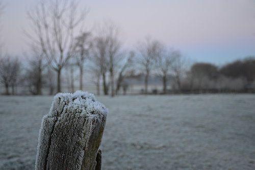 ijs in Nederland