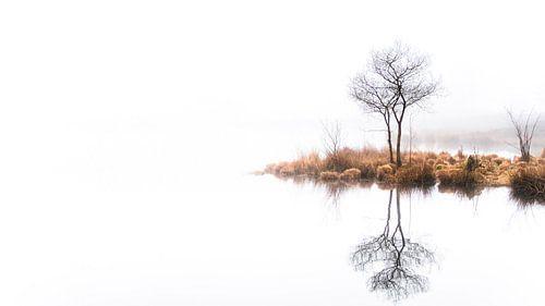 Twin trees Pano #1