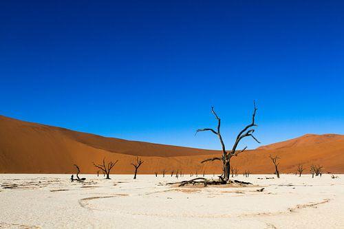 Deadvlei - landschap in Namibie