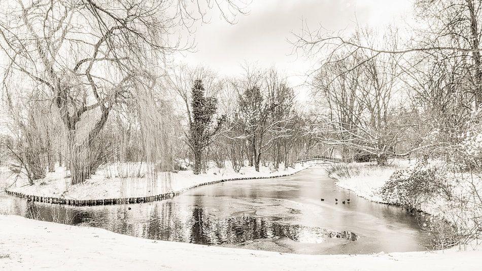 Winter in Park Buitenoord