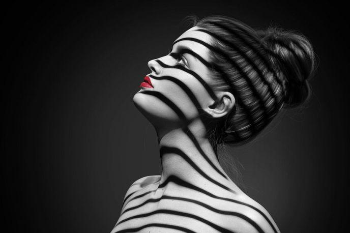 Zebra en profil