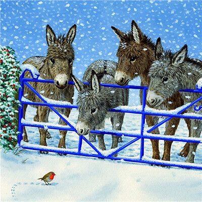 Donkeys Amp Robin Charity Christmas Cards Pack Of 10 Pretty
