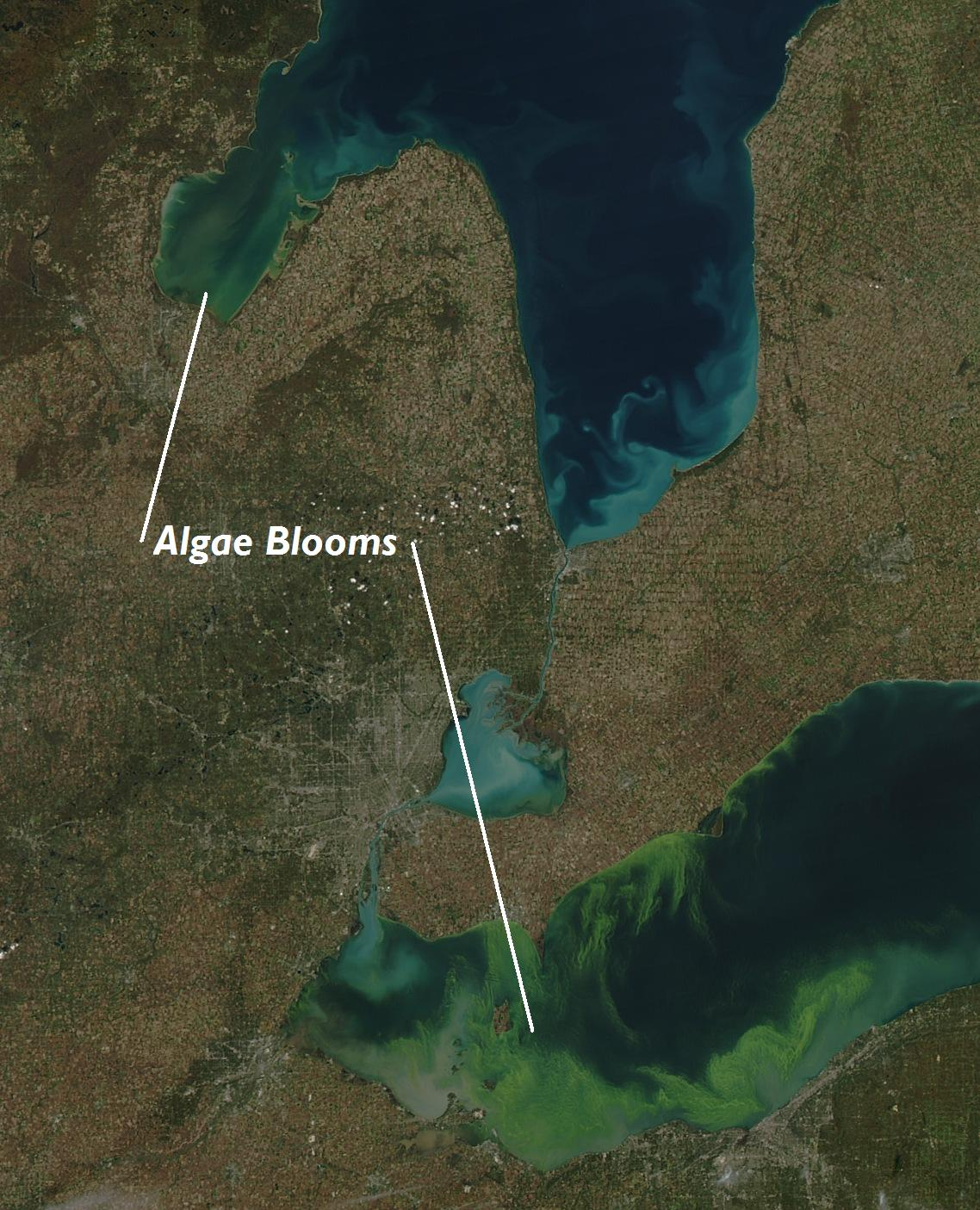 Algae Bloom Saginaw Bay