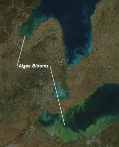 Algae Bloom Saginaw Bay