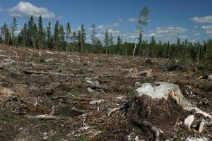 Michigan-Deforestation