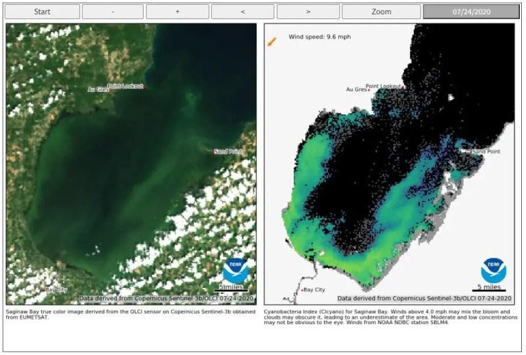 Great Lakes Algae