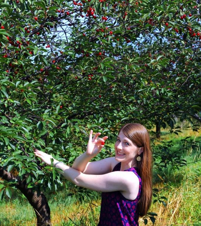 Michigan Cherries - Famous Michigan Foods
