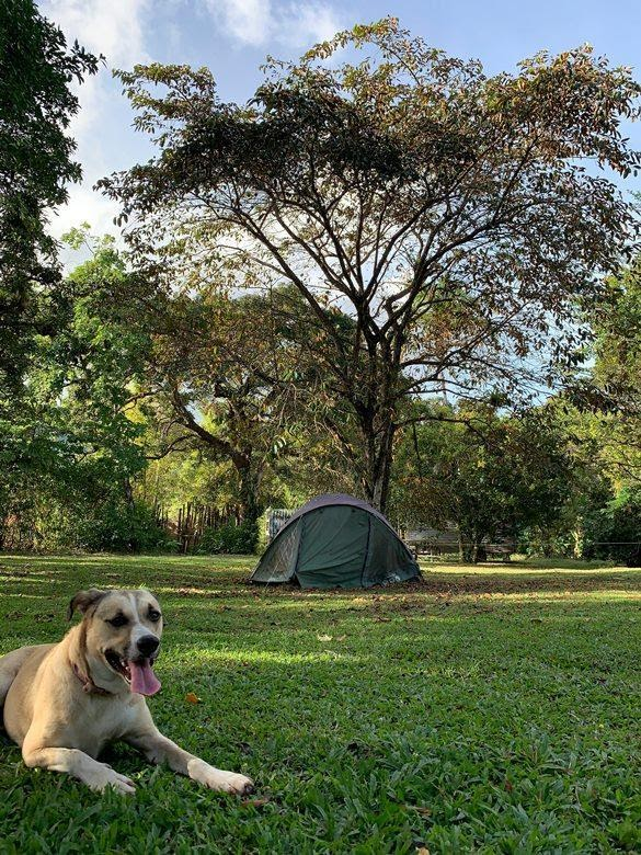 Dog Under a Tree
