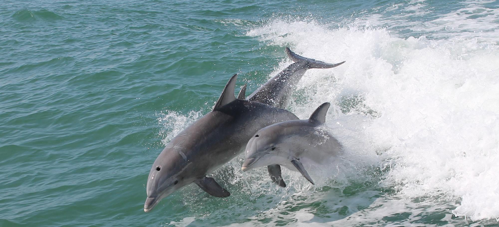 Thunder Cat Dolphin Watch Amp Speedboat Tours Wildwood