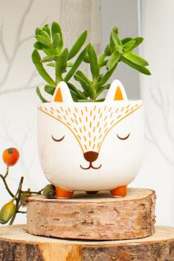 Sass & Belle - Woodland Fox Mini Planter