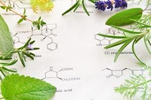 Celastrol & Triptolide from Tripterygium Wilfordii Powerful Anti-Cancer Treatments?