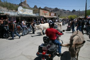 A cruise through the mountain top mining town of Oatman provided flashback scenes from another era and allowed a close encounter with resident carrot mooching burros.