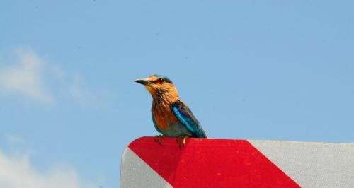 DSC_3700-kingfisher