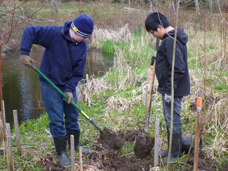 planting on spurgeon creek