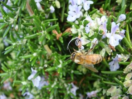 Bee - Original - m