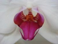 Orchid Says Ahhhhh..... - m