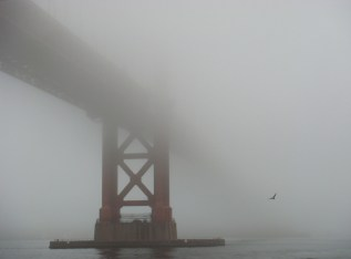 Under GGB in Heavy Fog - with Bird - m