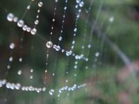 Wet Web 2 - m