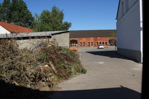 Überreste von Bäumen in Fischbeck