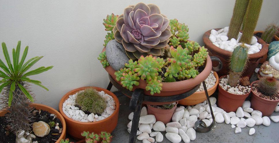 Plantas Suculentas área externa