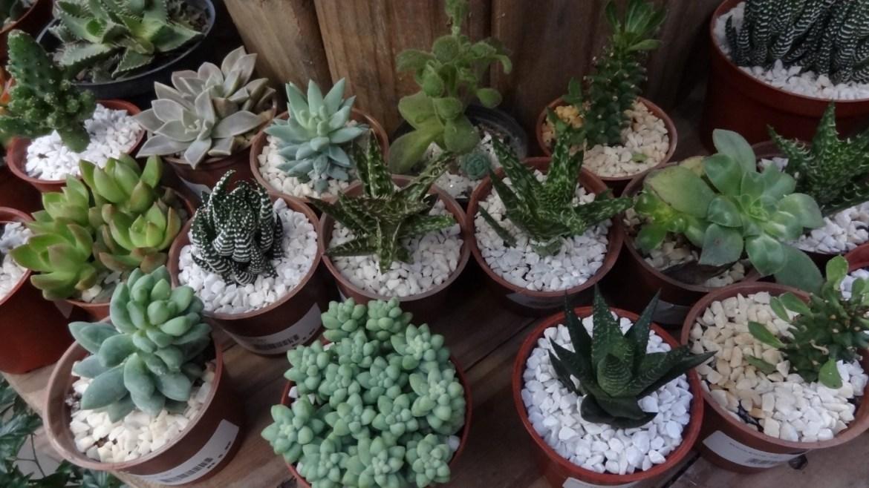 Vasos Plantas Suculentas