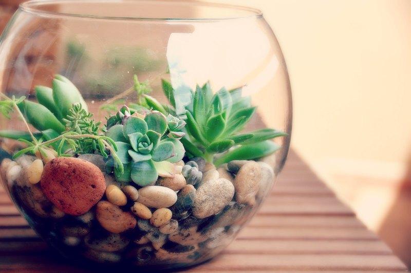 terrario com plantas suculentas