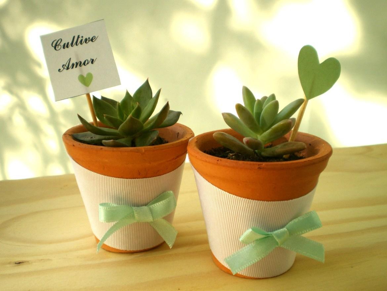 vaso de ceramica com plantas suculentas