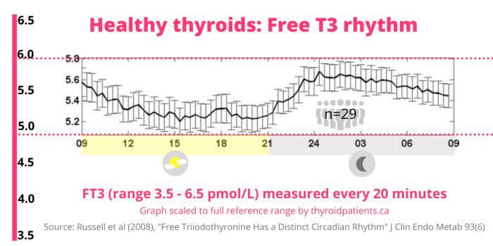 Circadian Rhythms Of Tsh Free T4 And Free T3 In Thyroid Health