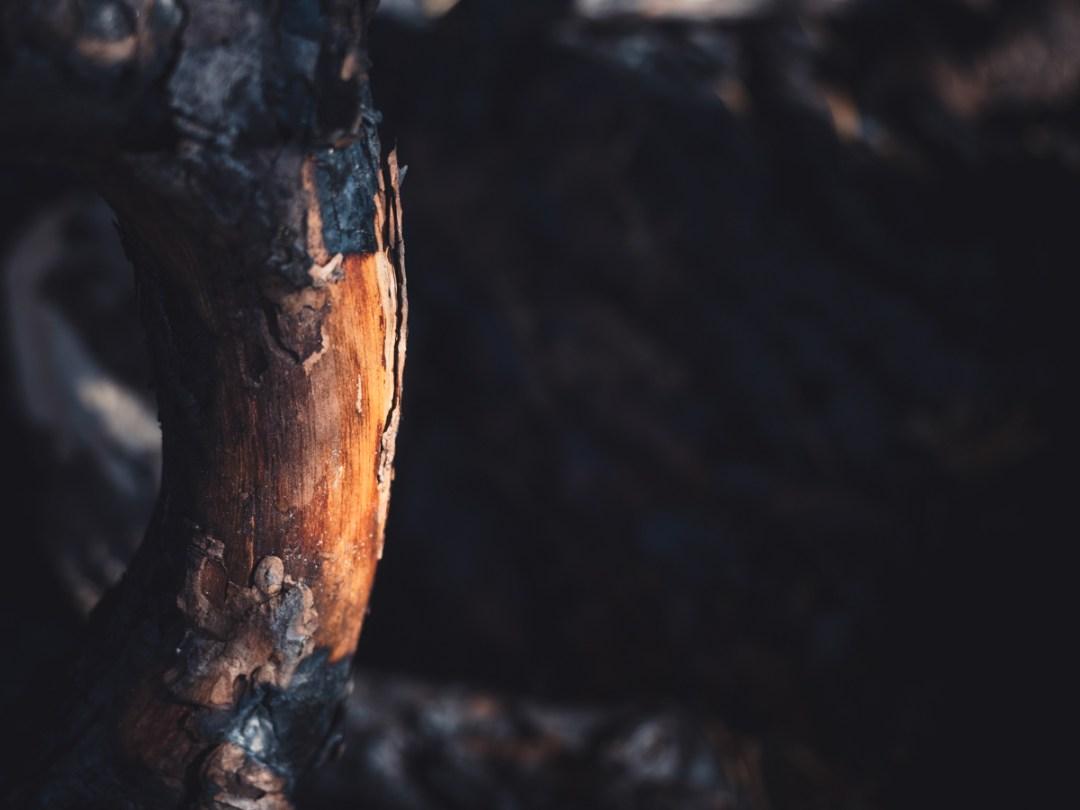 cima marana dopo l'incendio
