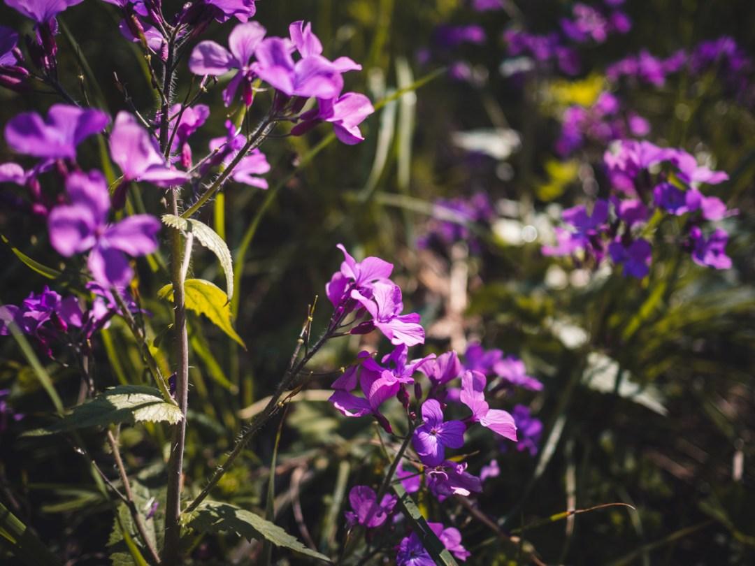 fiori marana