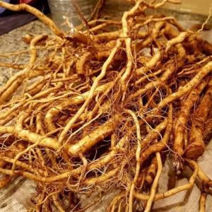 ashwagandha-roots-500x500