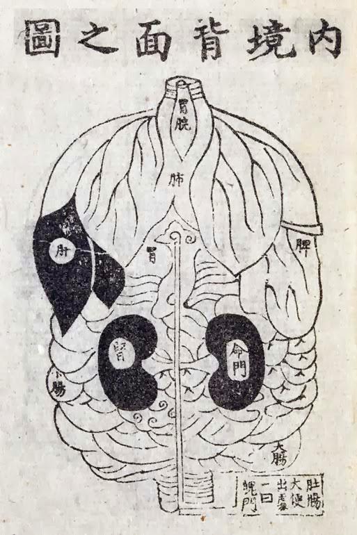 Représentation de l'aspect de l'intérieur du corps vu de dos selon Yanluozil