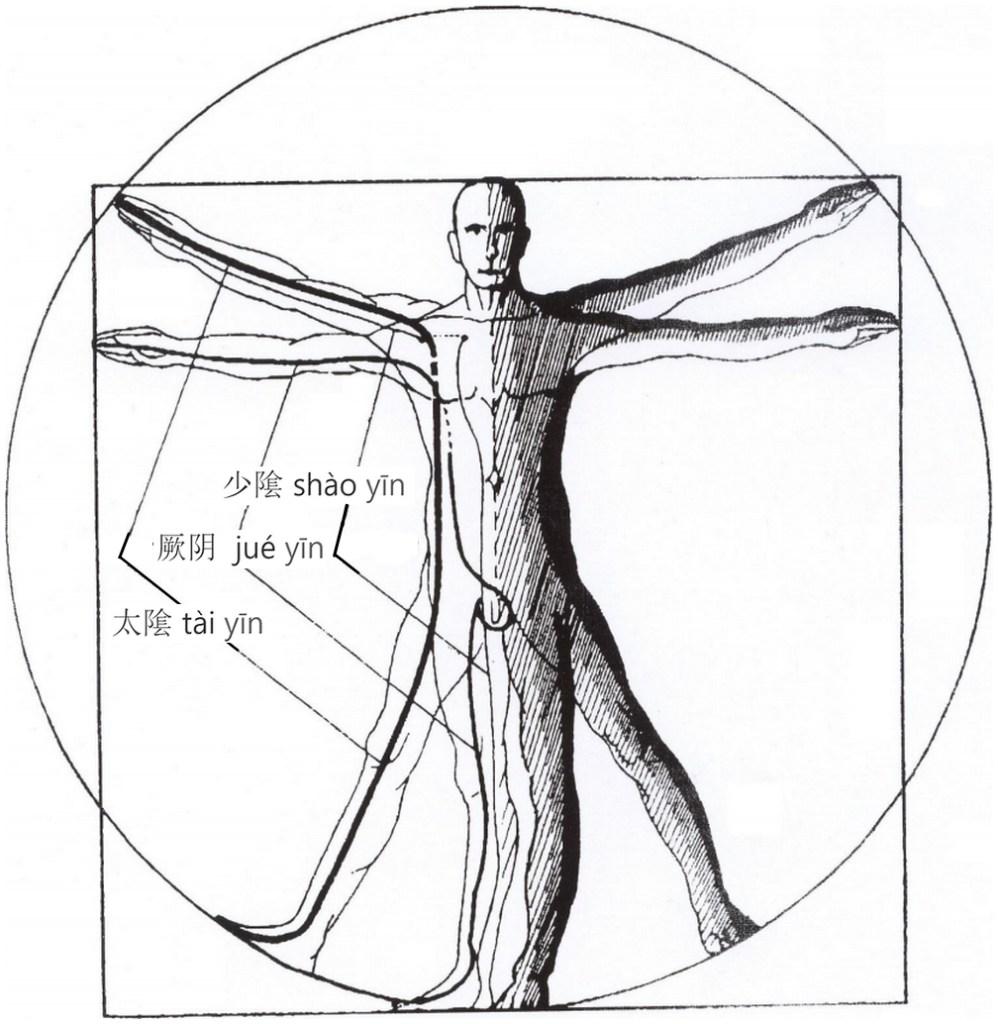 Illustration des trois grands méridiens yin