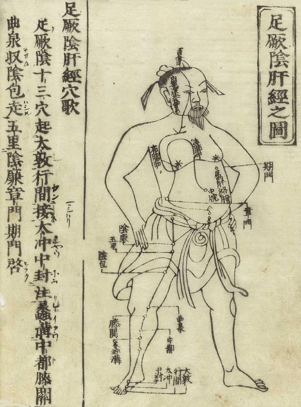 Gravure sur bois de Jushikei hakki 1716 de Hua Shou montrant le méridien du foie d'un personnage masculin debout, de face, portant un pagne avec le méridien représenté sur la poitrine et à la jambe avec des caractères chinois donnant les noms des points