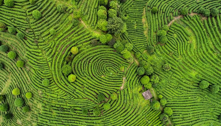 Photographie aérienne de champs de thé chinois