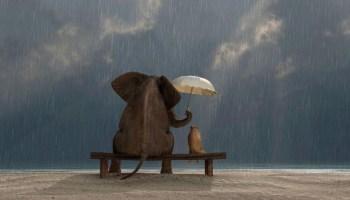 Illustration montrant un éléphant qui protège un chat de la pluie avec son parapluie