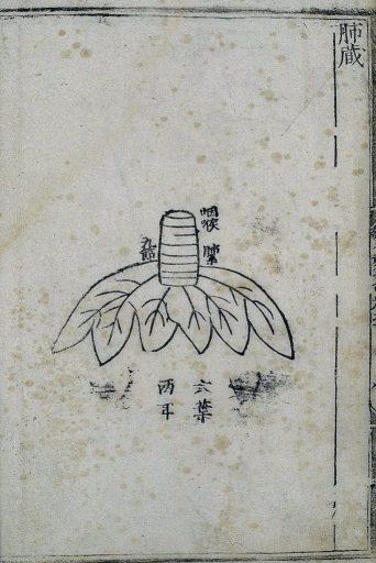 Anatomie des poumons dans la médecine chinoise ancienne, gravure sur bois illustrant une édition publiée en 1537.