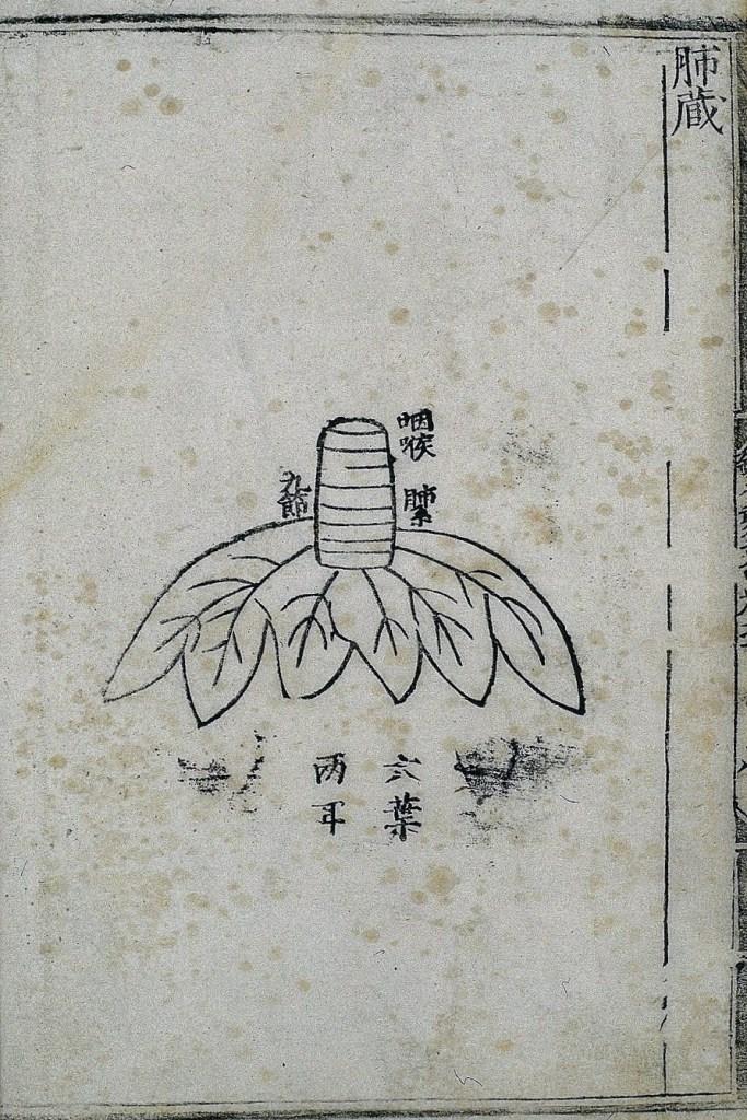Anatomie des poumons dans la médecine chinoise ancienne