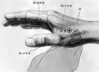 Le fond de la vallée, 合谷 hé gǔ , est le quatrièmepoint duméridien du gros intestin.