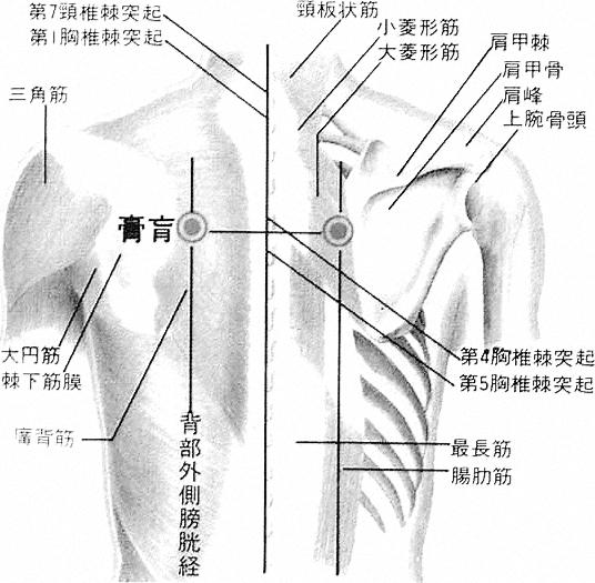 Point d'assentiment des graisses et des membranes vitales, 膏肓俞 gāohuāngshù, est le quarante troisième point du méridien de vessie