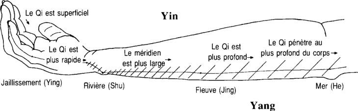 Illustration de la circulation du qi et les cinq points antiques