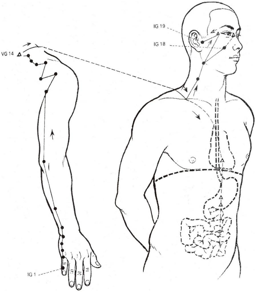 Illustration du méridien de l'intestin grêle