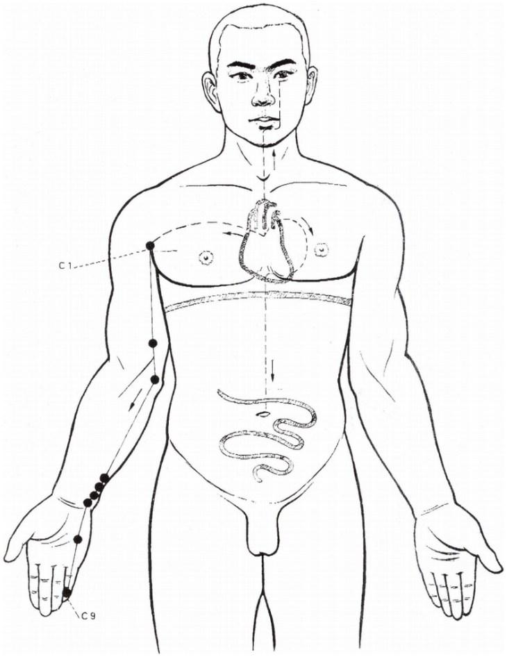Illustration du méridien du cœur