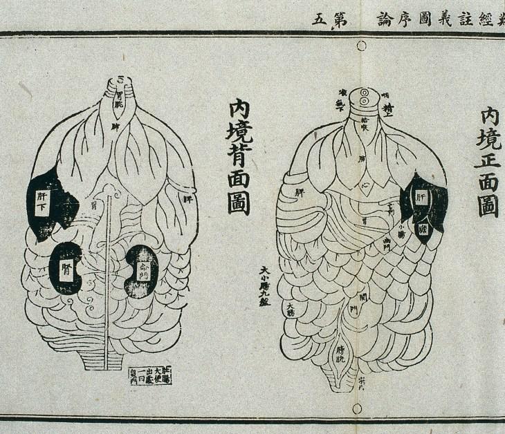 Gravure sur bois, du 15e siècle, illustrant les organes internes selon le canon taoïste,